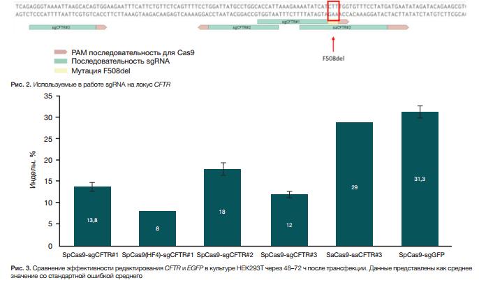 Экспериментальные подходы к таргетному редактированию гена CFTR с помощью CRISPR-CAS9