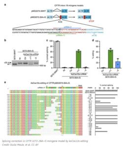 Итальянские ученые разработали стратегию редактирования мутации 3272-26A>G